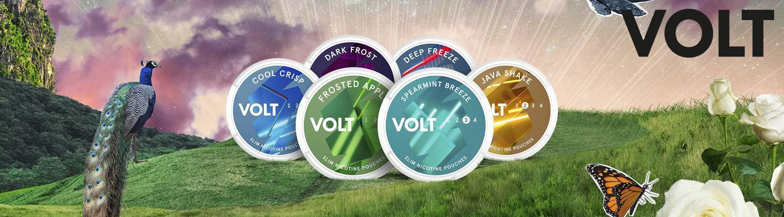 New VOLT from SM at Snus24