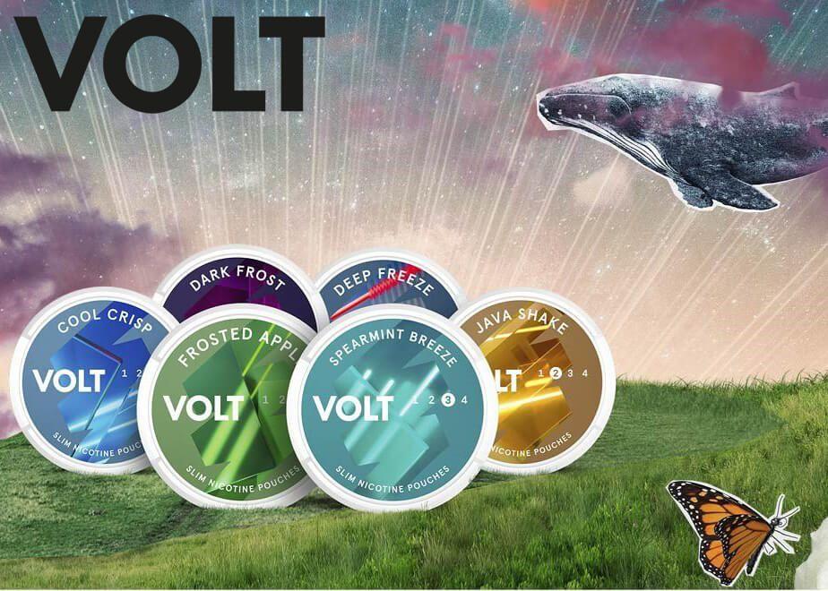 New VOLT at Snus24